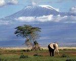 Туры на Килиманджаро