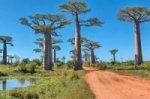 Круиз вдоль побережья Мозамбика и о. Мадагаскар